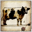 Yankee Cow